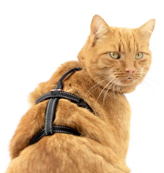 Safety Harness Pro Katzengeschirr ausbruchsicher schwarz reflektierend